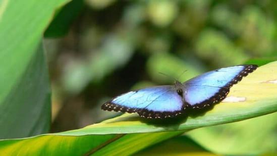 Costa-Rica5